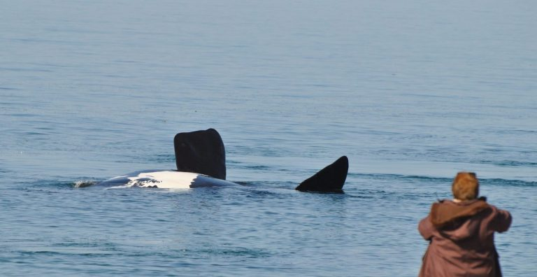 Doradillo ballena Puerto Madryn