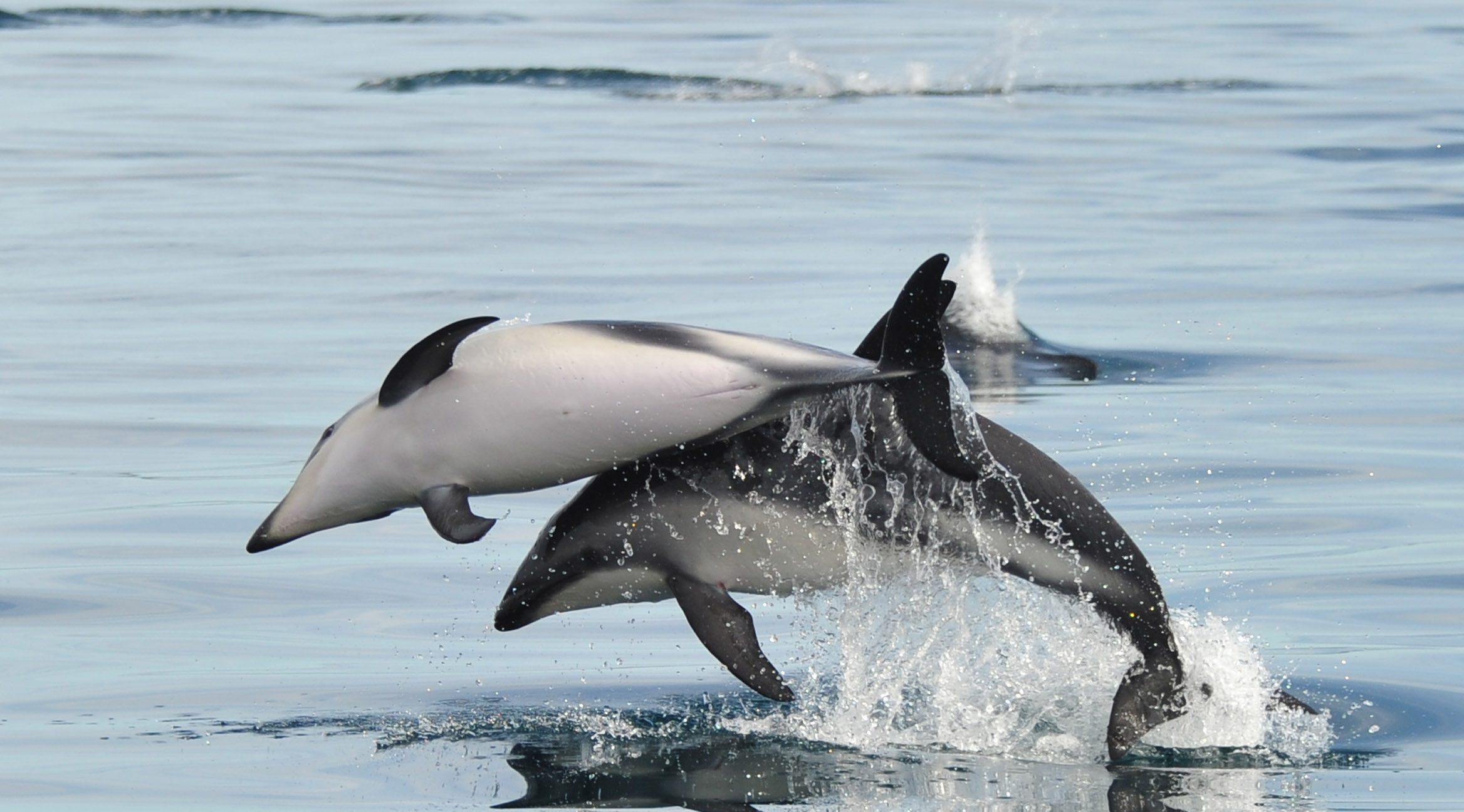 Delfines Puerto Madryn