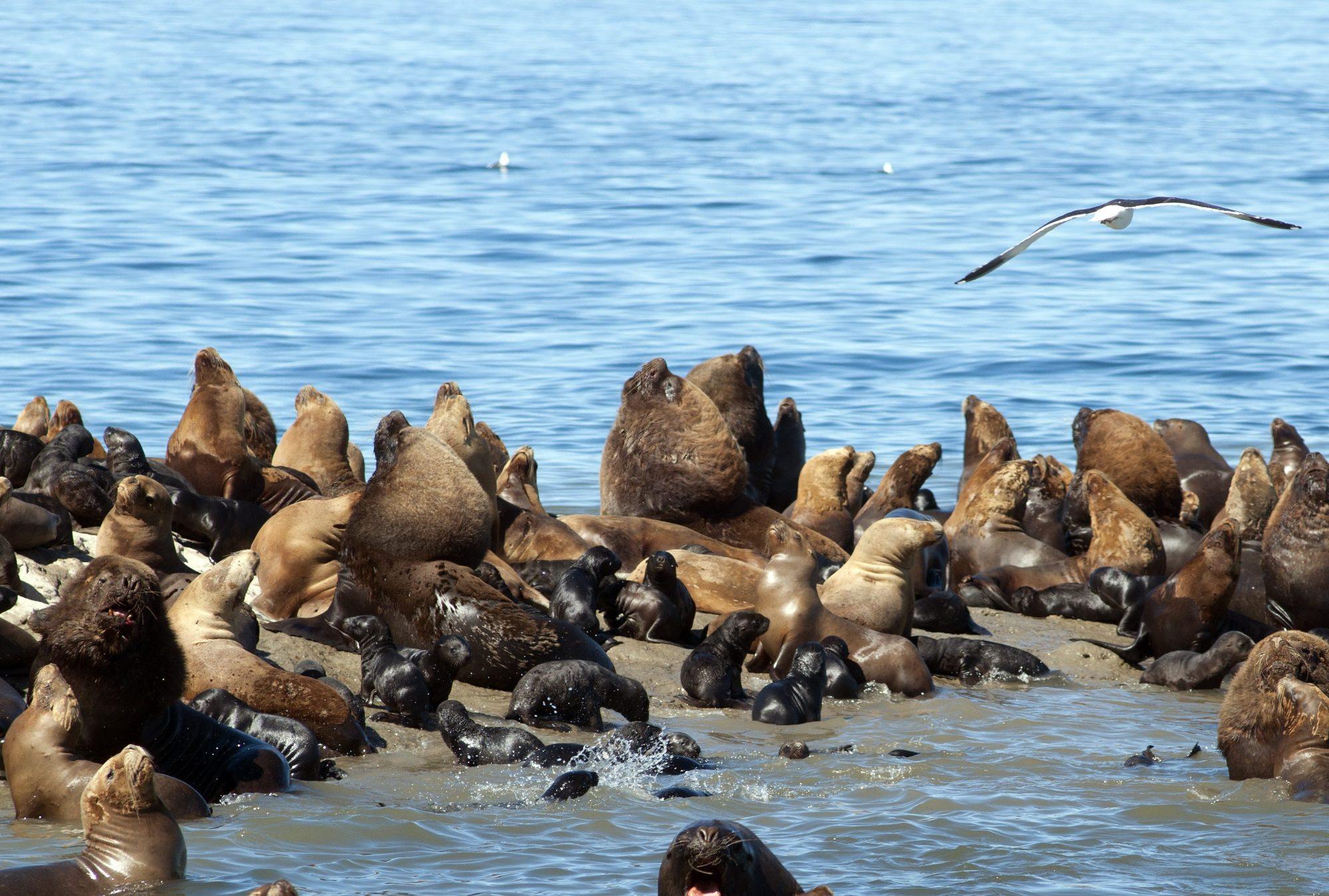punta loma Puerto Madryn