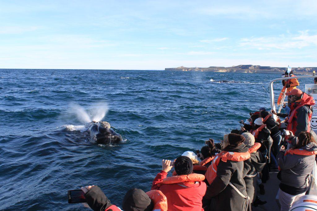 Avistaje de Ballenas Puerto Madryn