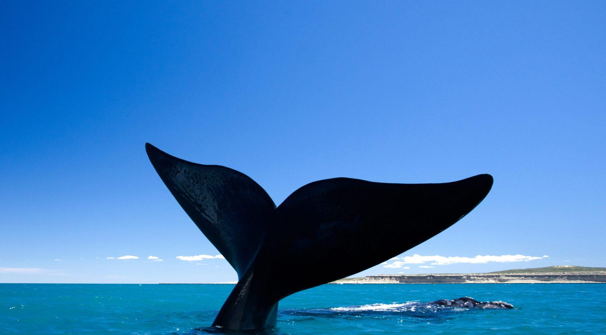 Turismo en numeros Puerto Madryn