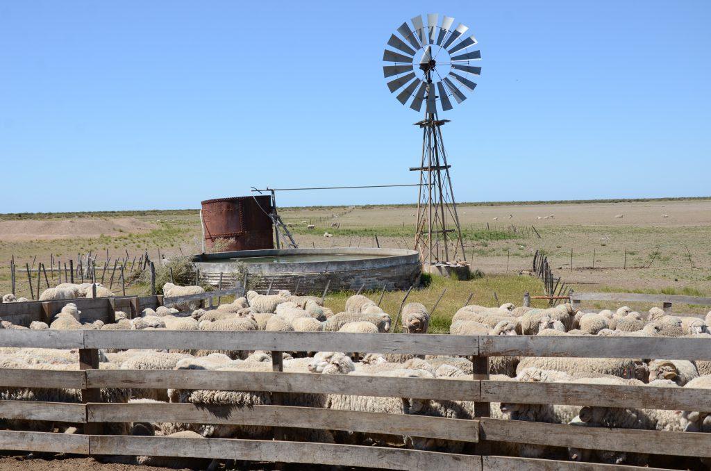 Turismo Rural Puerto Madryn